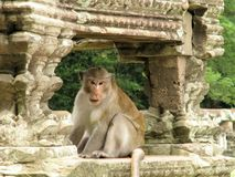 Cambodjaanse tempel Royalty-vrije Stock Foto's