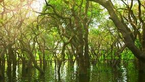 camboya Bosque y puente de madera inundados metrajes