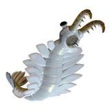 Cambrian Anomalocaris Underside stock illustration