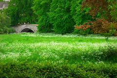 cambridge ängfjäder Royaltyfri Foto