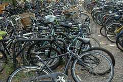 Cambridge Bicycles Royalty Free Stock Images