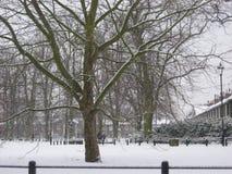 Cambridge onder Sneeuw Stock Fotografie