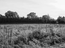 Grantchester Meadows in Cambridge in black and white. CAMBRIDGE, UK - CIRCA OCTOBER 2018: Grantchester Meadows made famous by Pink Floyd Ummagumma album in black stock photo