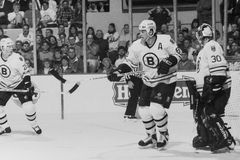 Came Neely, Boston Bruins fotografia de stock