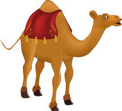 Camel. Africa animals arabia bridle Stock Image
