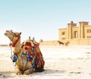 Free Camel Royalty Free Stock Image - 13852636