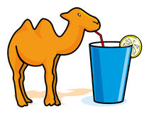Camel. Drinking water – vector illustration Royalty Free Stock Photo