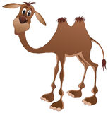 Camel. Vector illustration shows a jolly camel vector illustration