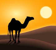 Camel. In desert and sunset Royalty Free Stock Photos