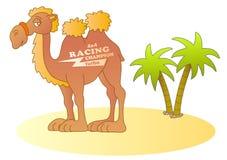 Camel. Funny desert racer; vector illustration Stock Image