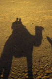 Camel. Shadow of a camel with two people Stock Photography