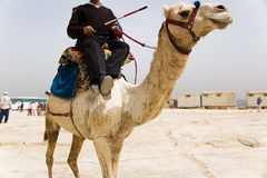 Camel. Egypt Police riding Camel Royalty Free Stock Photo