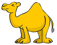 Camel. Lazy Camel Stock Photos