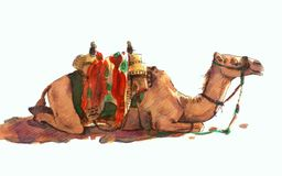 Camel. Watercolor on paper, and realistic manner, a simplified Royalty Free Stock Photo