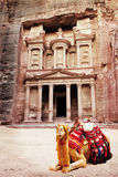 Camel. In front of world wonder Petra, Jordan Royalty Free Stock Photography