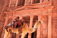 Camel against treasury Stock Photography