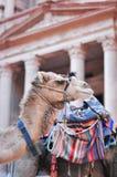 Camel in Al Khazneh - Treasury, Petra Stock Photography