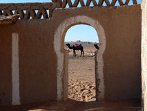 Camel as Seen Through Gate Royalty Free Stock Photography