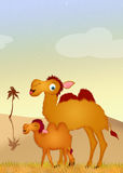 Camel and baby camel Stock Photos