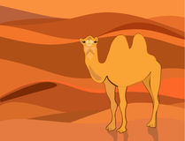 Camel on the background of the desert Royalty Free Stock Photo