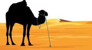 Camel on the background of desert landscape Royalty Free Stock Photo