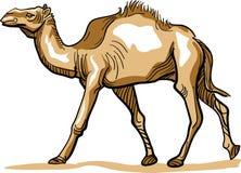 Camel. Brush stroke line art camel clip art image Royalty Free Stock Photo