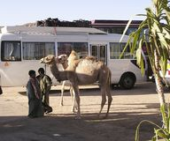 Camel and bus , Egypt, Africa. Young boys and their camels waiting for tourists, Karnak, Egypt royalty free stock photos