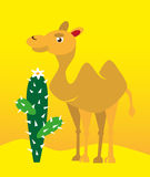 Camel and cactus Stock Photos
