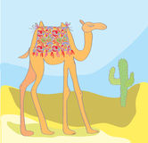 Camel with cactus in the desert Stock Photography