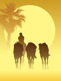 Camel caravan Stock Photo
