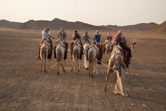 Camel caravan. Tourist on camels going through egyptian desert. The summer season is beginning Royalty Free Stock Photos