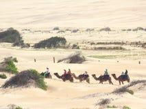 Camel caravan in dunes Royalty Free Stock Photo