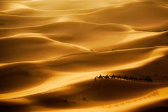 Camel Caravan. Going through the sand dunes in the Sahara Desert, Erg Chebbi, Maroc