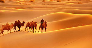 Camel Caravan in the Badain Jaran Desert Royalty Free Stock Image