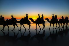 Camel caravan on the beach at sunset. Silhouette of a camel safari at Cable Beach, Western Australia at sunset royalty free stock photo