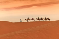Camel Caravan in Desert Stock Photos
