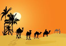 Camel caravan in desert Stock Image
