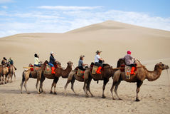Camel caravan in the desert Stock Photos