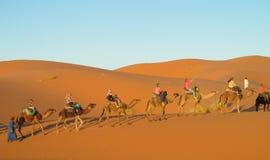 Camel caravan in desert. Camels caravan in the sand desert dunes of Sahara. Safari on camels back royalty free stock photos