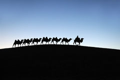 Camel caravan in the desert dawn Royalty Free Stock Photo