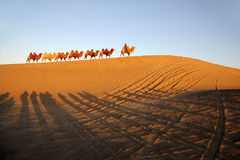 Camel caravan in the desert Stock Image