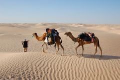 Camel caravan in desert Sahara Stock Images