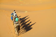 Camel caravan in desert and shadows stock photo