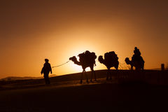 Camel caravan going through the desert Royalty Free Stock Images