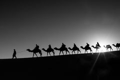 Camel caravan going through the desert Stock Images