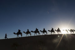 Camel caravan going through the desert Stock Photo