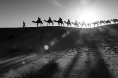 Camel caravan going through the desert Stock Image