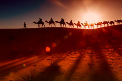 Camel caravan going through the desert Royalty Free Stock Image
