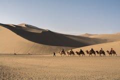 Camel caravan going through the sand dunes in the Gobi Desert, C Stock Image