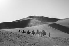 Camel caravan going through the sand dunes in the Gobi Desert, C Royalty Free Stock Photos